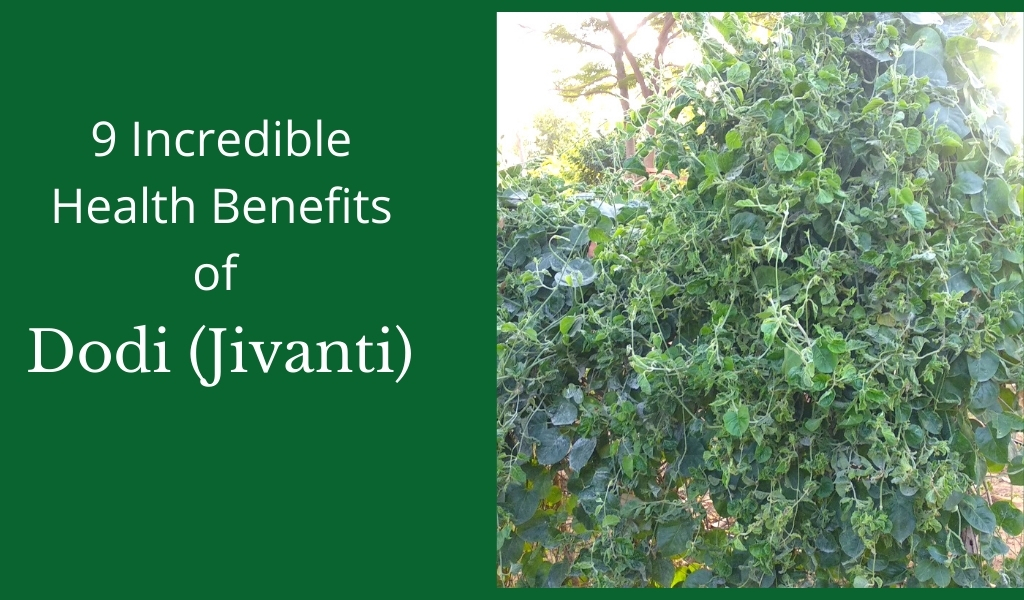dodi jivanti health benefits