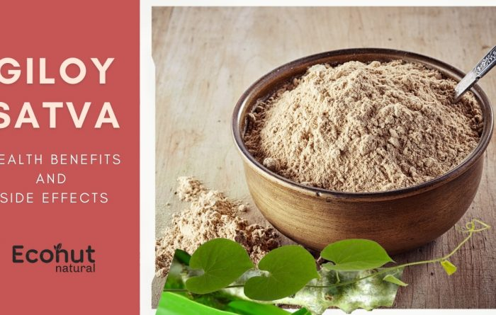 Giloy Satva – Health Benefits And Side Effects