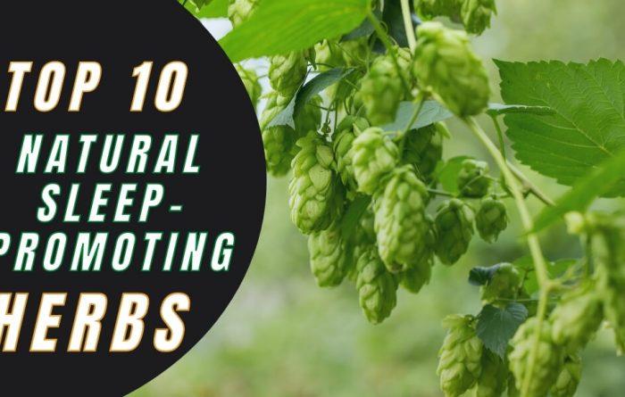 10 Natural Herbs for Good Sleep